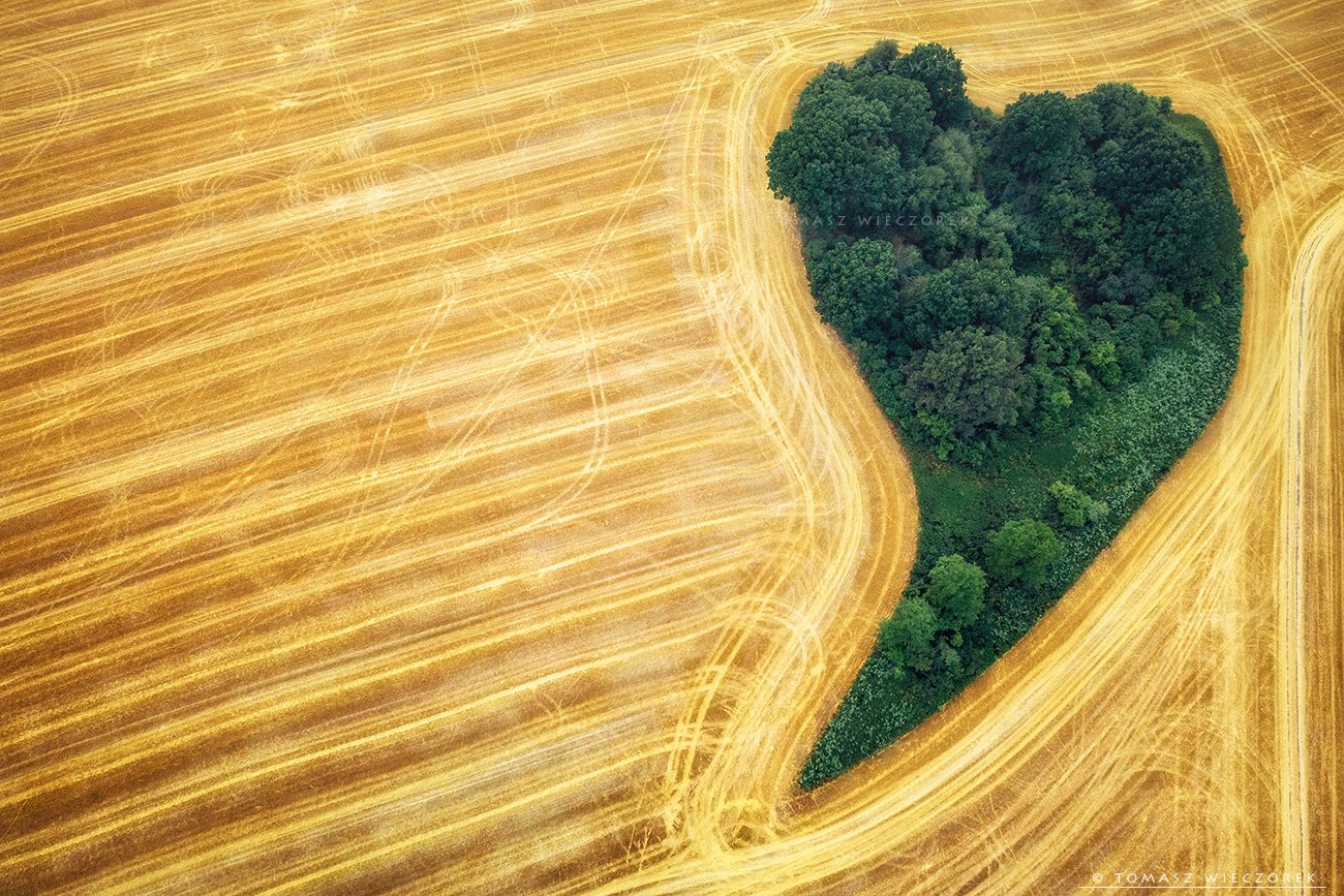 fields, drone, dji, air, poland, polish, landscape, sunrise, sunset, colours, summer, awesome, amazing, adventure, travel, beautiful, morning, heart, love, Tomasz Wieczorek