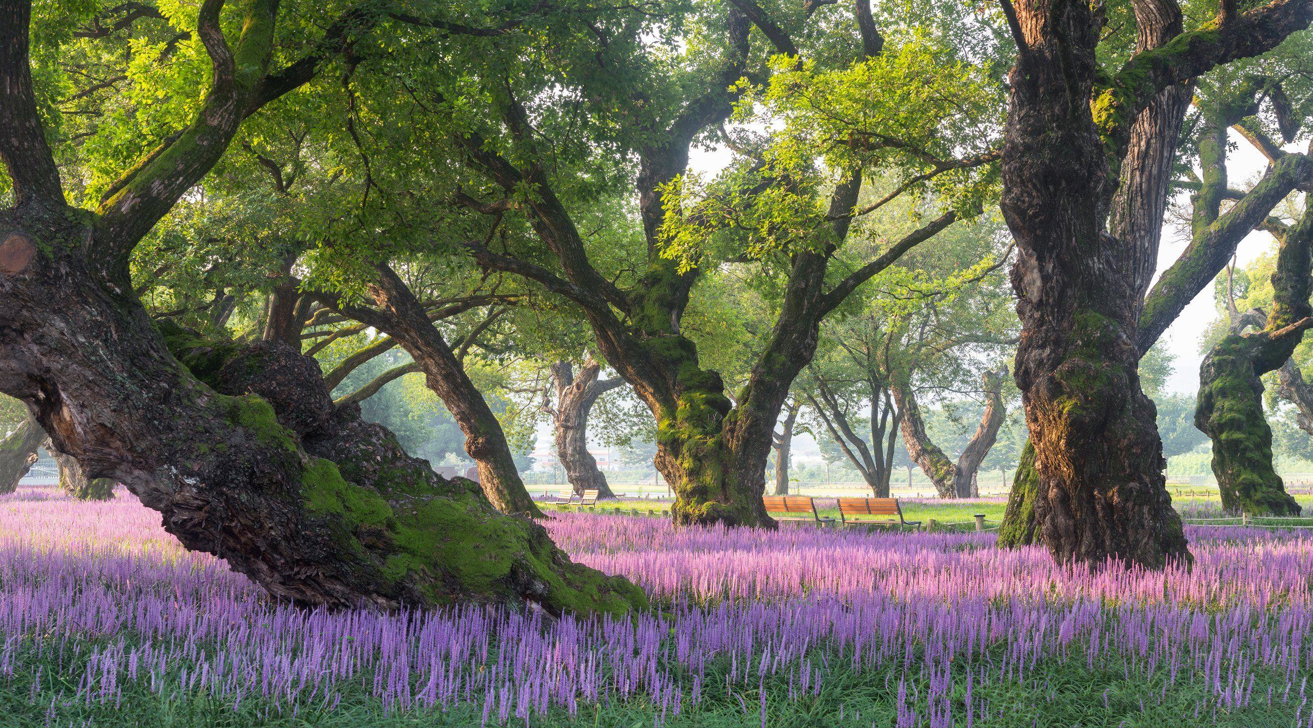 nature, forest, liriope, moss, trees, purple, 류재윤