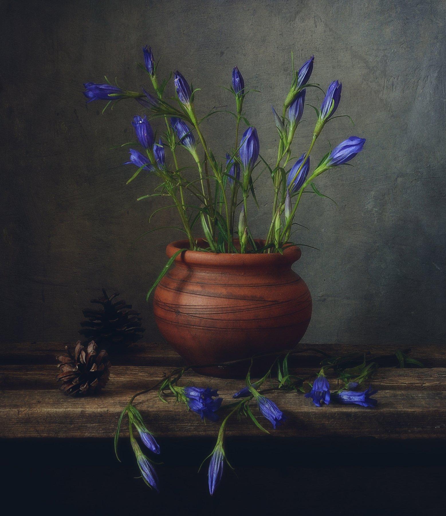 натюрморт,still life,цветы,горечавка, Наталия К