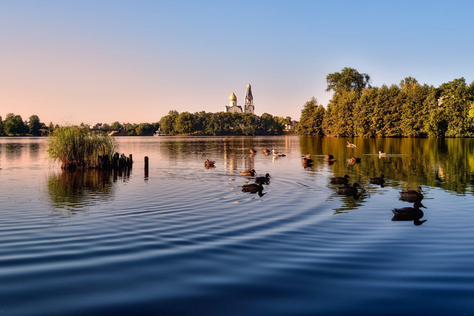 утро,озеро,утки,храм, Виталий Полуэктов