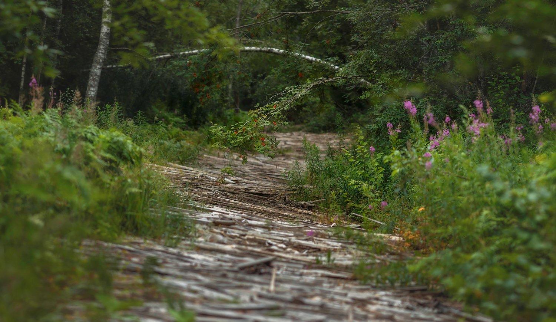 пейзаж, природа, ленобласть, SHE (Aiya) Таня