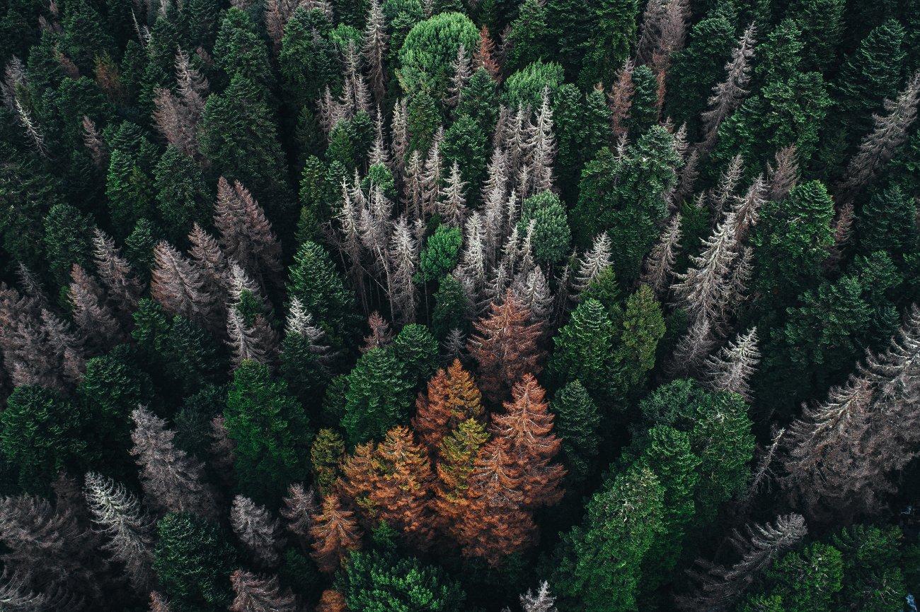 лес природа, Михаил Лежнёв