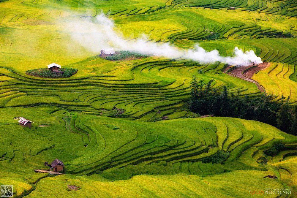 quanphoto, landscape, rice, terraces, highland, plateau, valley, farmland, agriculture, golden, harvest, culture, vietnam, quanphoto