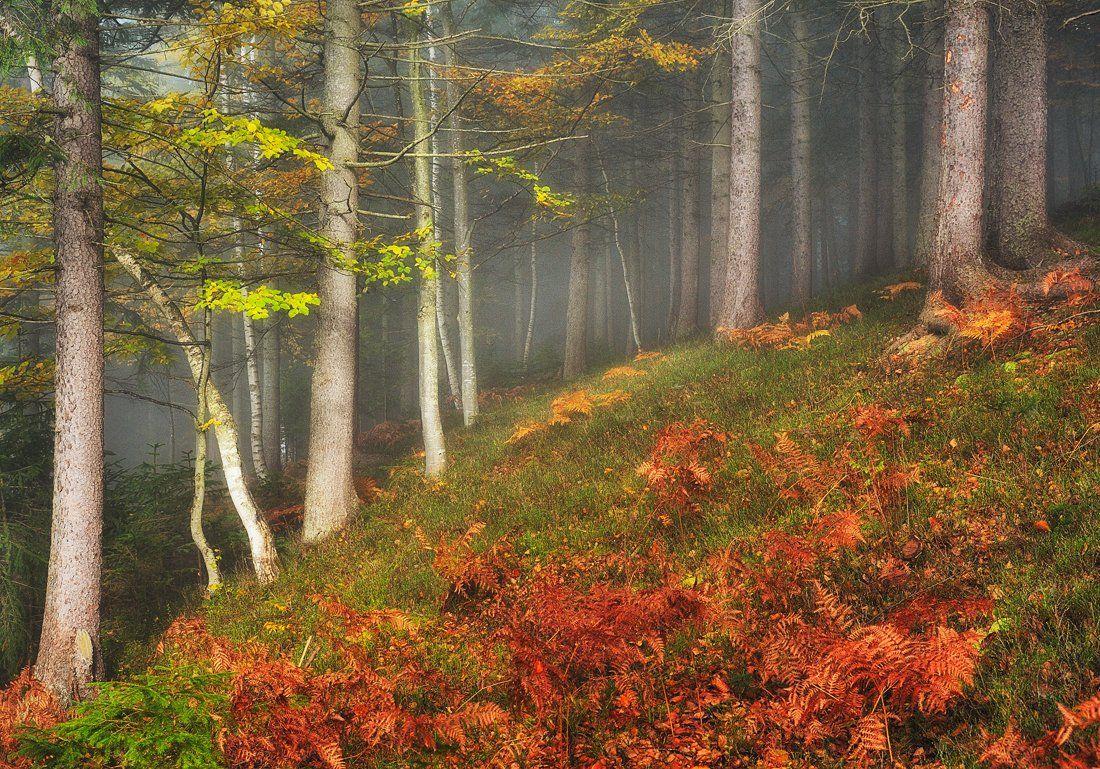 Осенний лес. Нестерчук Сергей