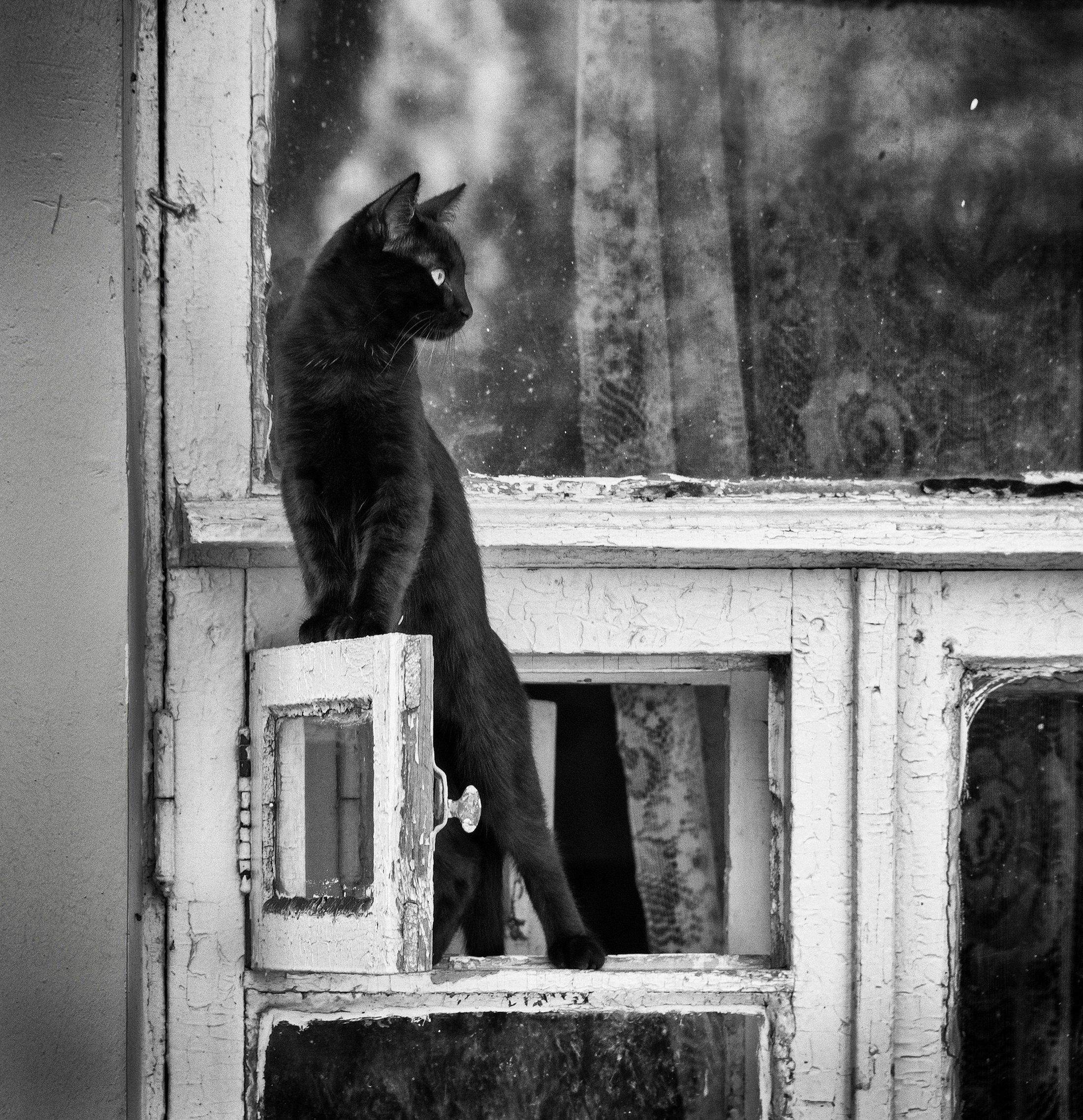 кот, форточка, домашние животные, свобода, Брагилевский Владимир