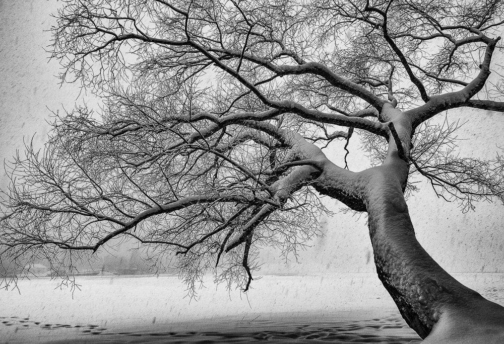 снегопад, дерево, заснеженное, река, снег, берег, Брагилевский Владимир