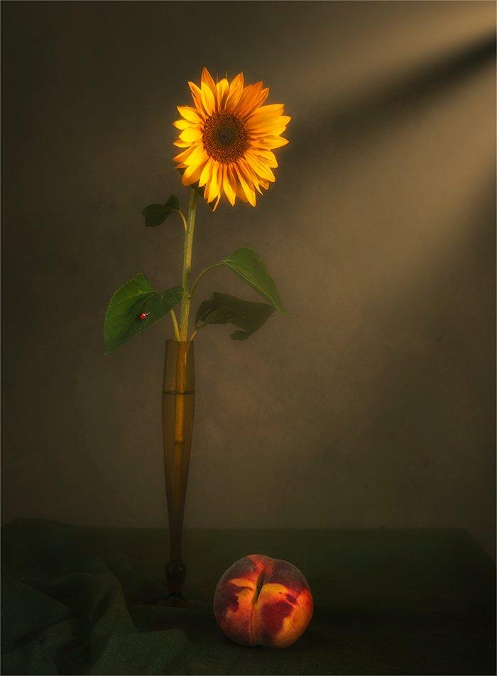 still life, натюрморт,    винтаж,    цветы,  подсолнух, персик, еда, божья коровка, насекомое, минимализм, луч света,, Шерман Михаил