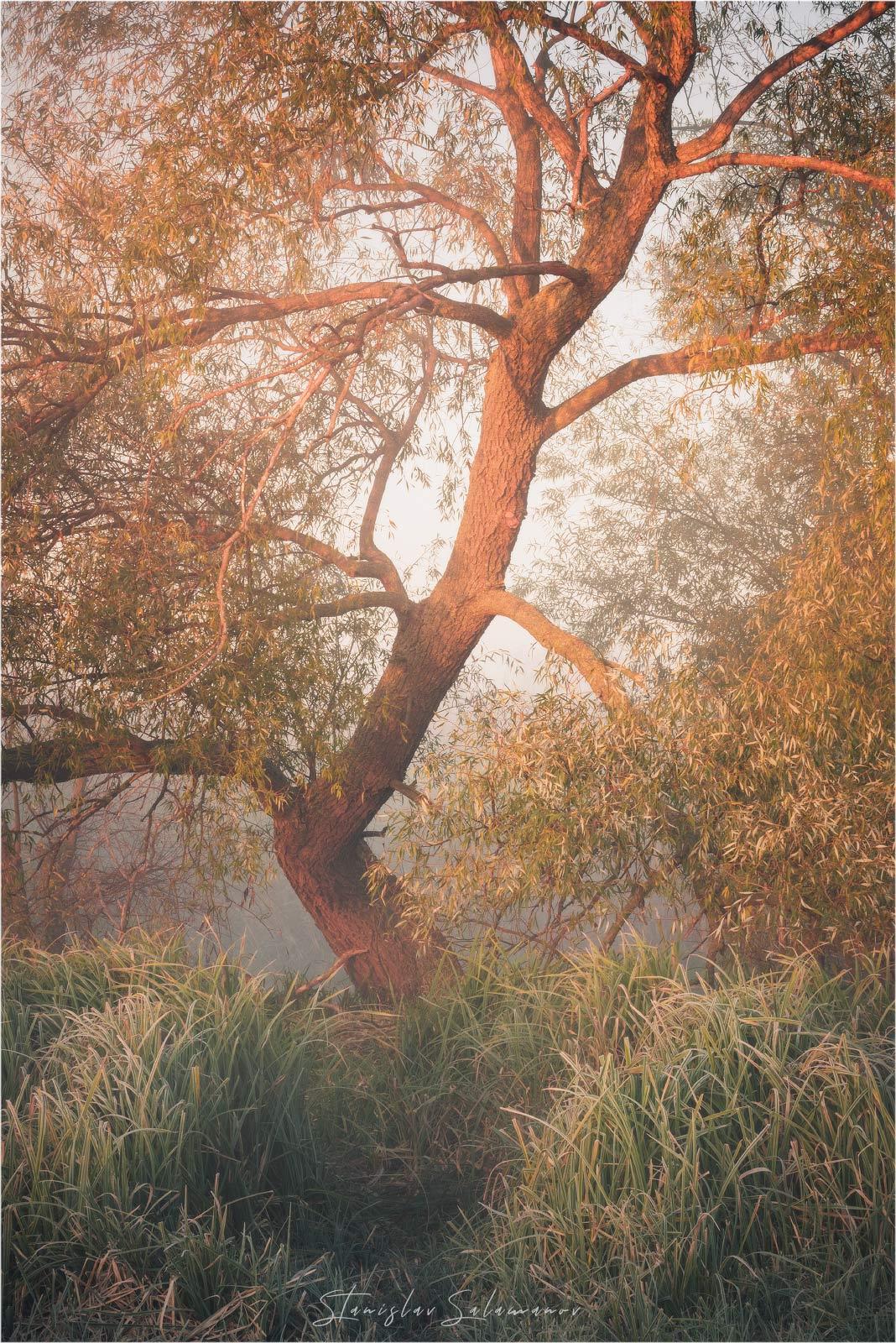 утро, рассвет, туман, осень, осенняя, осенняя пора, пейзаж, дерево, река, Станислав Саламанов