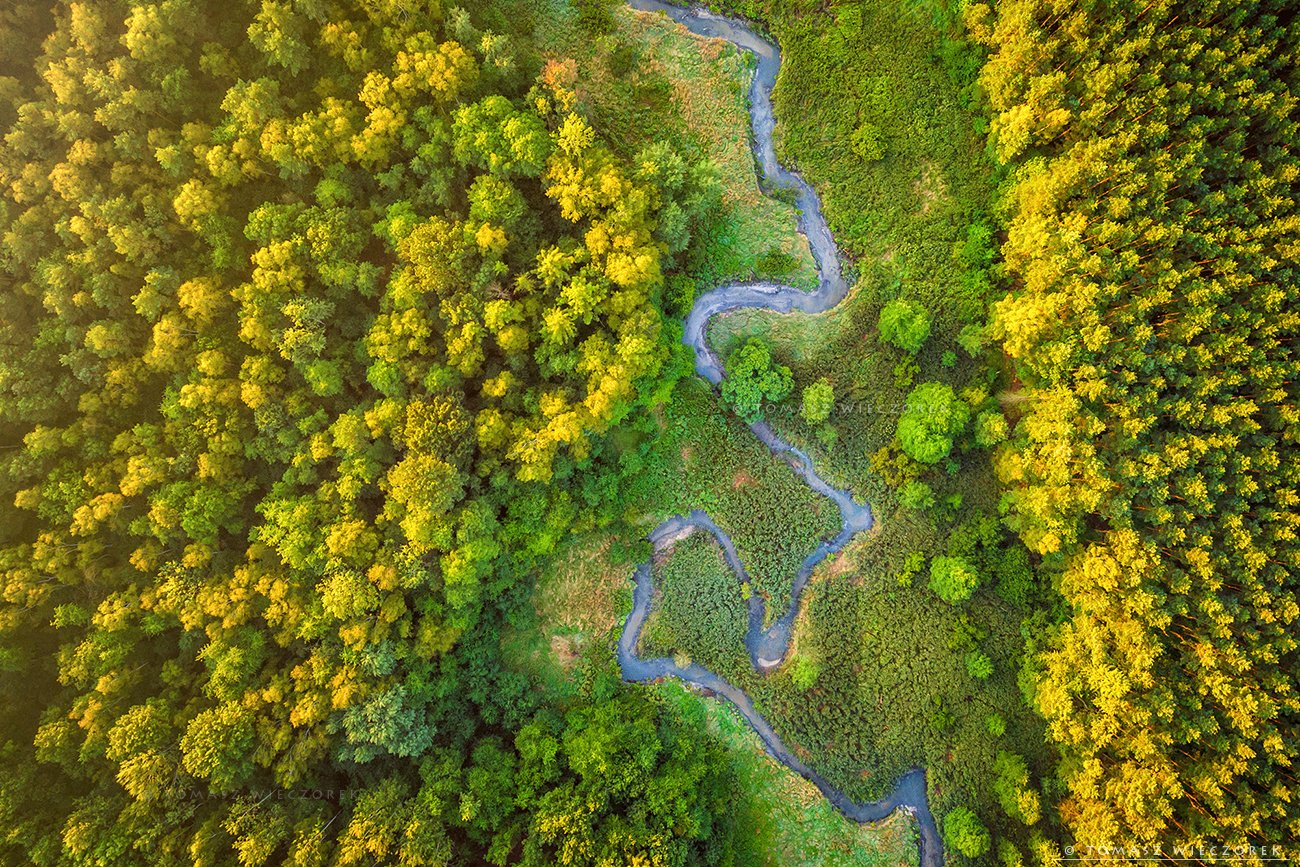forest, drone, dji, air, poland, polish, landscape, sunrise, sunset, colours, summer, awesome, amazing, adventure, travel, beautiful, morning, river, meandering, Tomasz Wieczorek