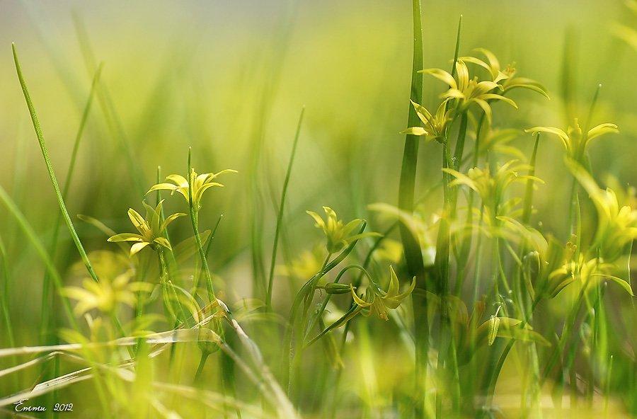 природа, весна, трава, цветы, етти