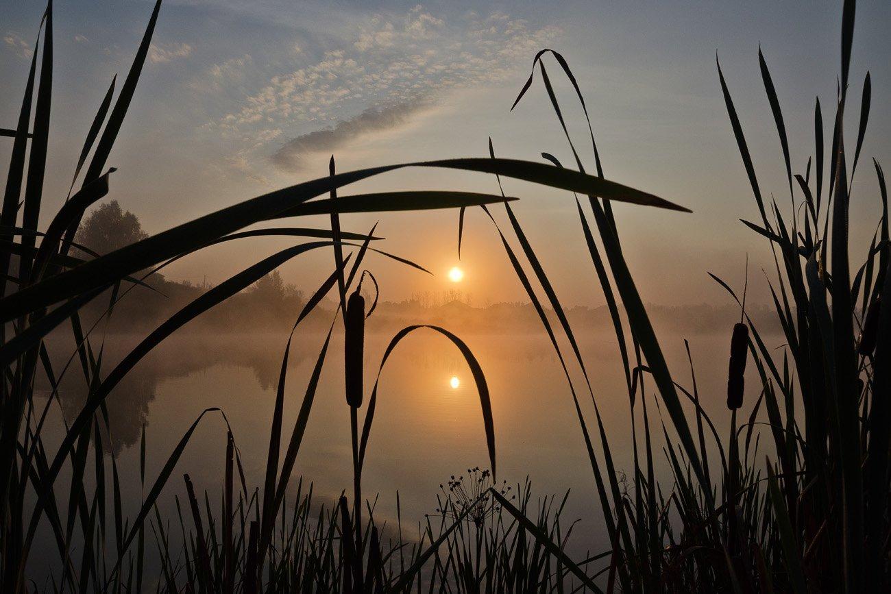 утро, рассвет, рогоз, природа, архангельское, Михаил Агеев