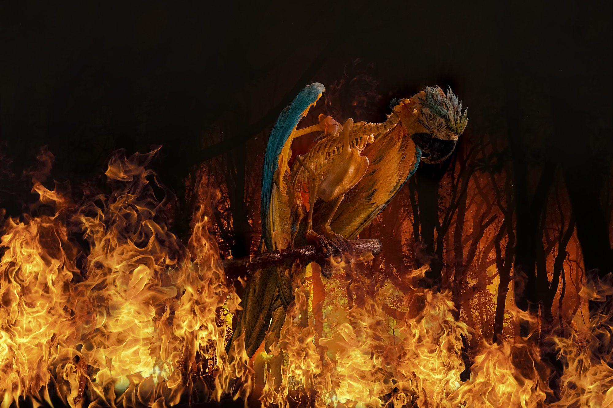 conceptual, fire, art , fine art, Antonio Bernardino