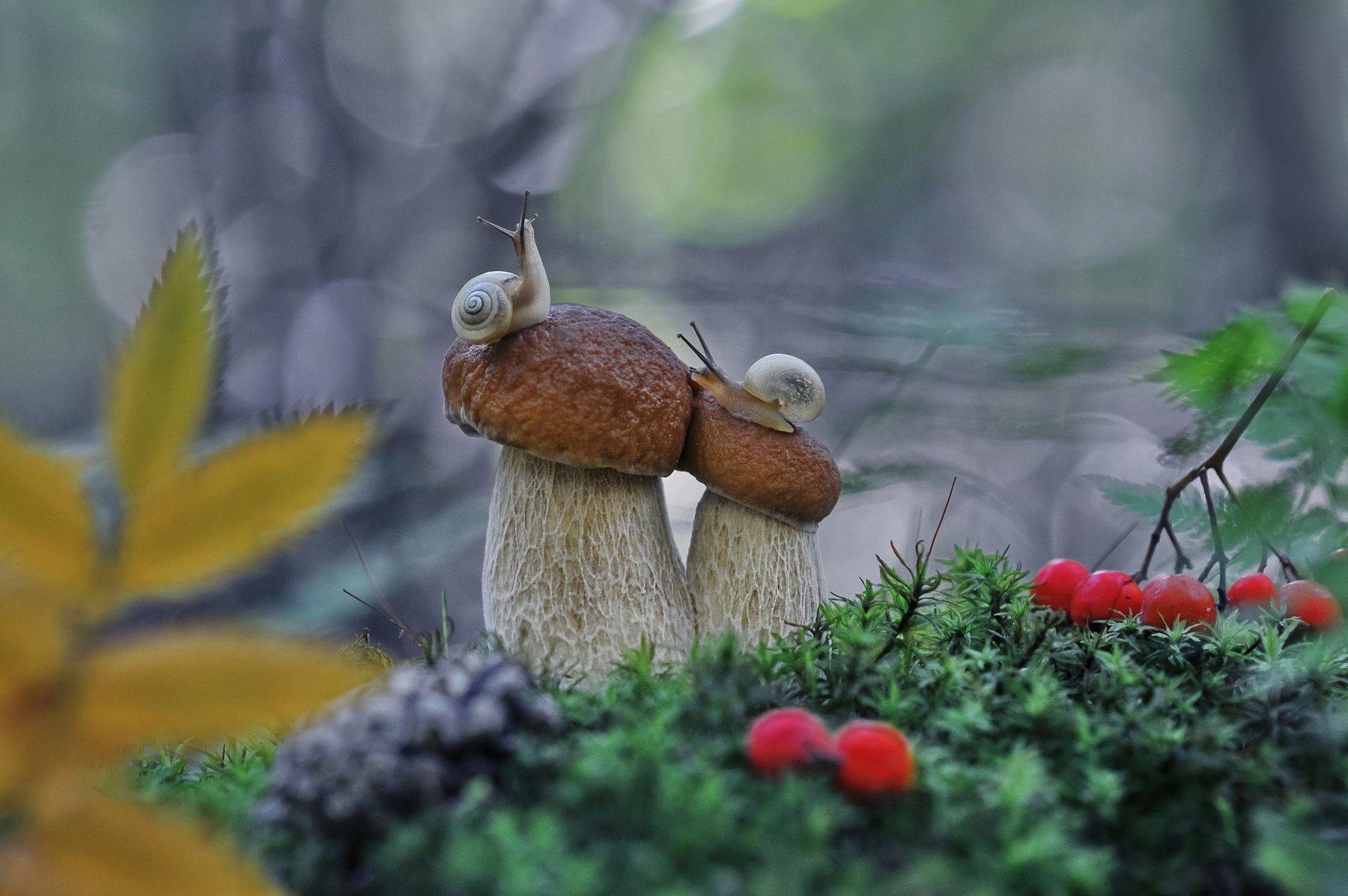 грибы, улитки, Александр Гвоздь