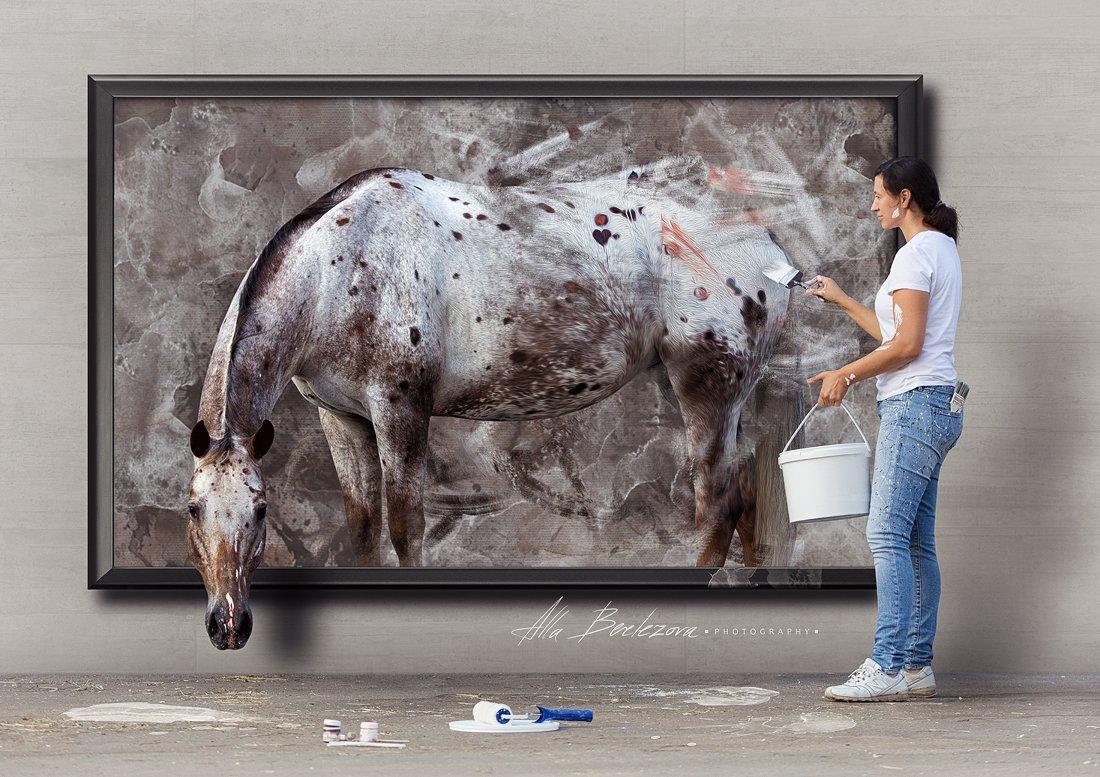 horse, appaloosa, лошадь, аппалуза, портрет, животные, usa, Alla
