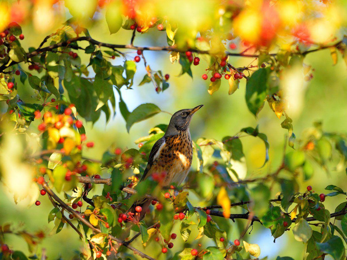 природа, фотоохота,  птицы, животные, осень, vladilenoff