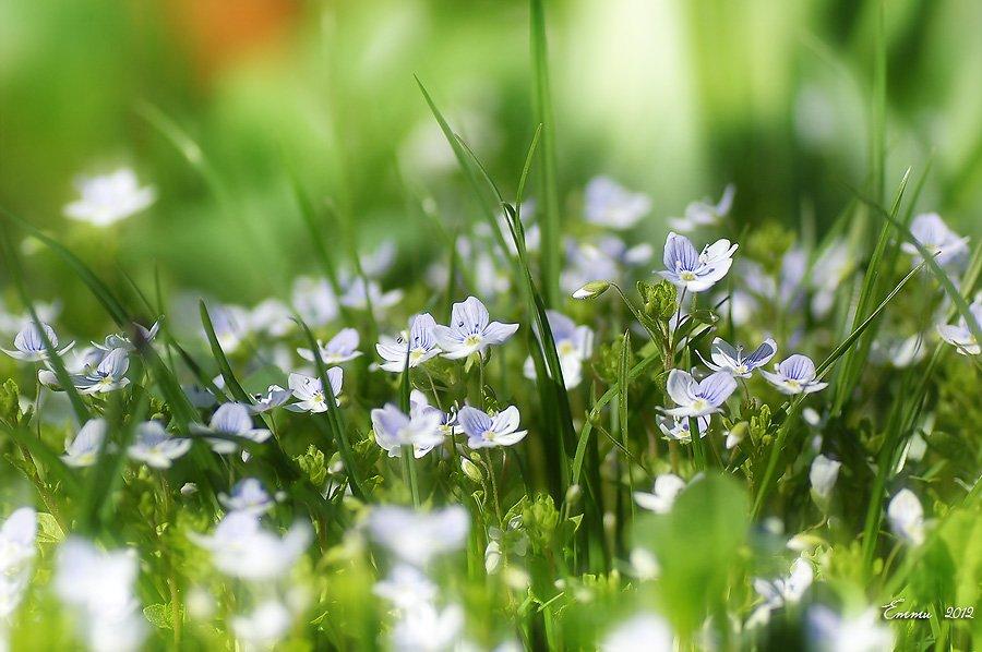 цветы, природа, весна, макро, трава, етти