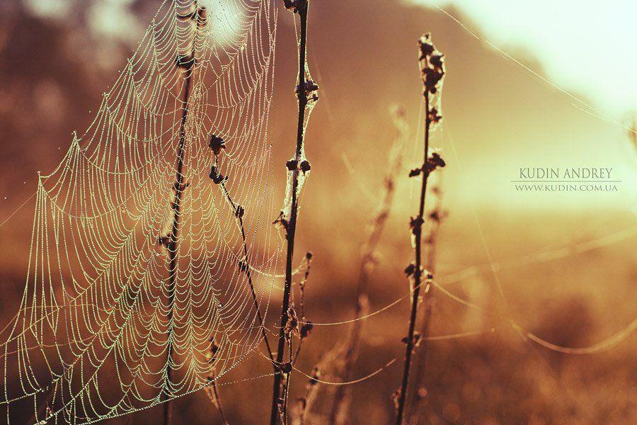 утро, паутина , роса, рассвет, Andrey Kudin