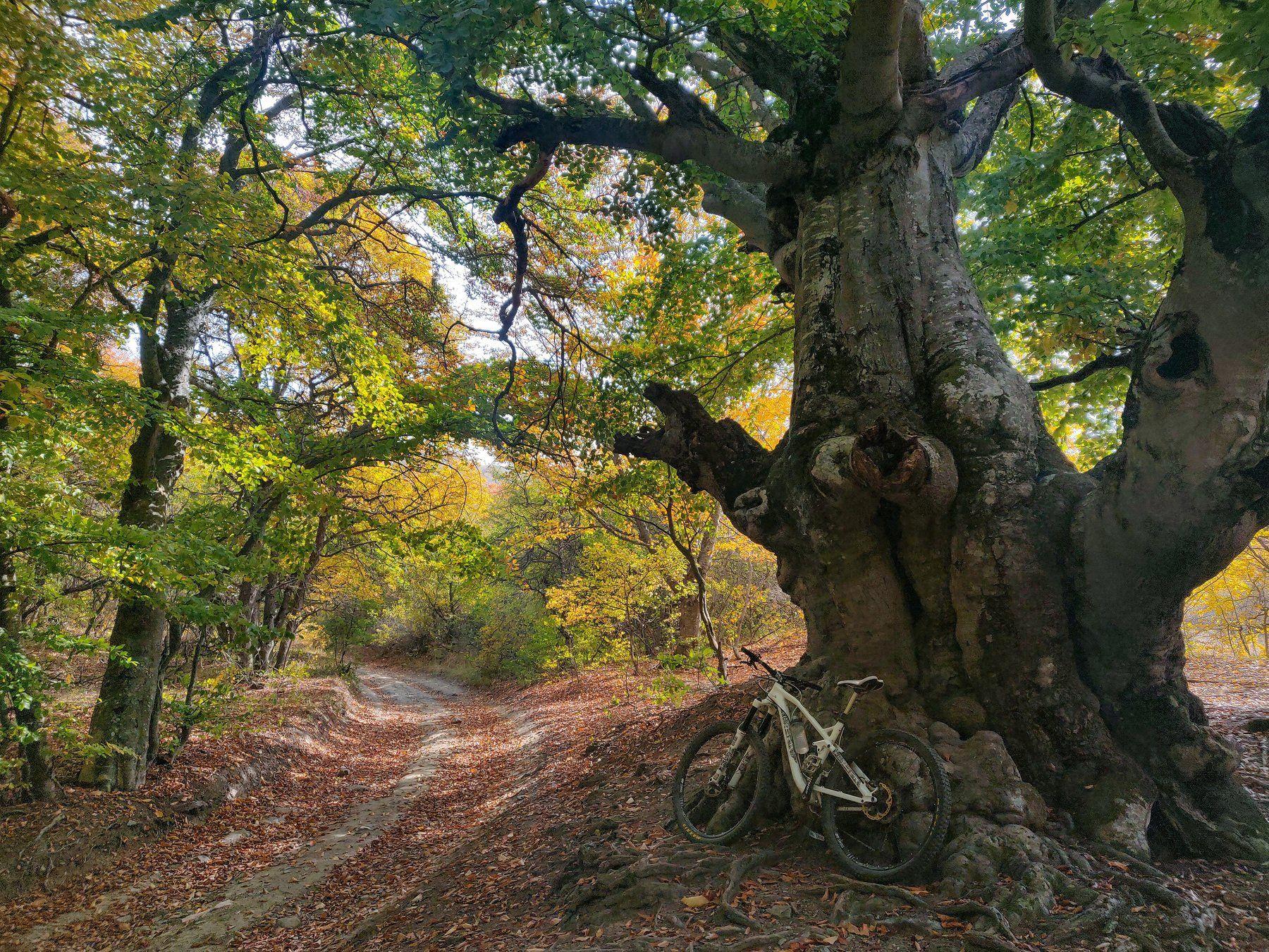 Крым, лес, вело, алушта, Королев Саша