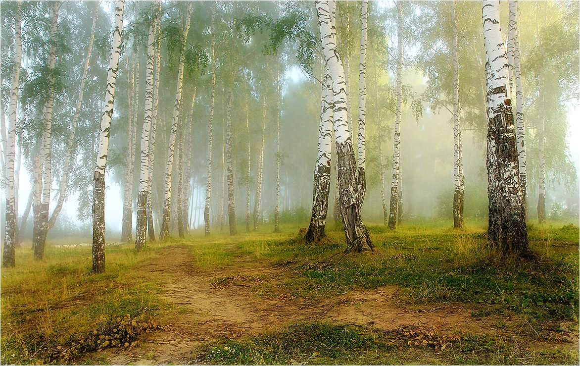 В соловьином краю — я пою, Средь берёз и зелёной дубравы…