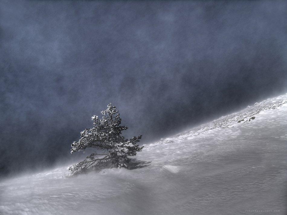 kovalenko, крым, пейзаж, дерево, зима, снег, метель, Юрий Коваленко