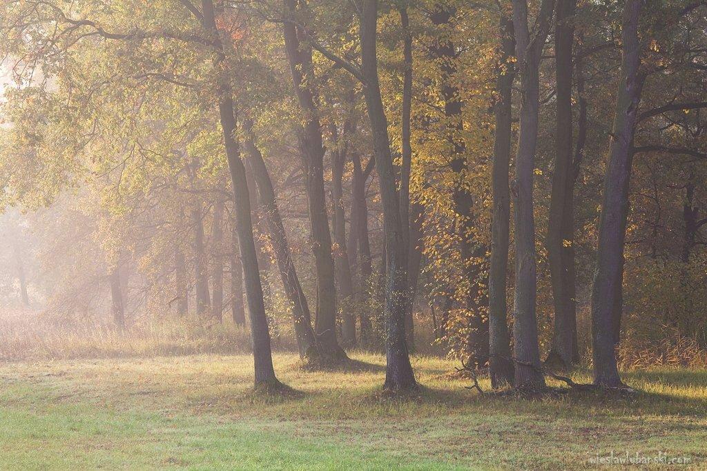 morning, fog,, ciudat