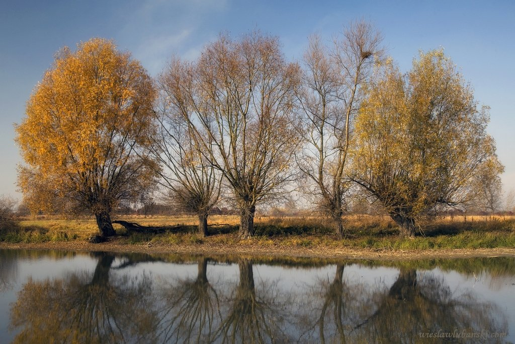 willows, ciudat