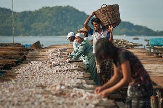 Раннее утро, индонезейцы раскладывают рыбу для сушки.