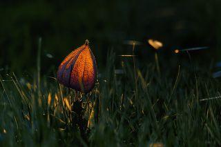 Svetlomet ©