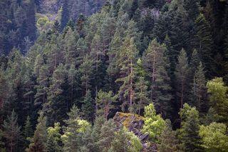Горы,Лес,Теберда ...