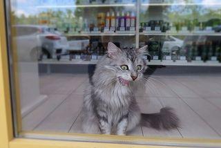 Да ну??? Рекламный кот магазина...