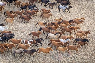 Символ Сары-Арки - лошади, ведущие практически дикий образ жизни.