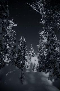 Замысловатые скульптуры зимнего леса!