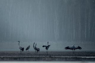 Cranes sleeping place