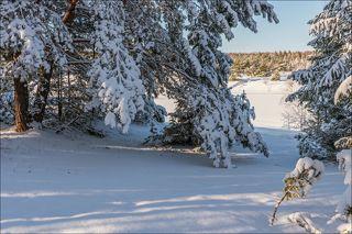 Утро в лесу после недавнего снегопада