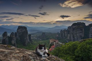 The Tiger of Meteora...