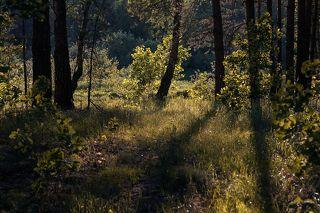 01 Берега лесных рек в начале лета – благодатный объект для съёмки в контровом свете