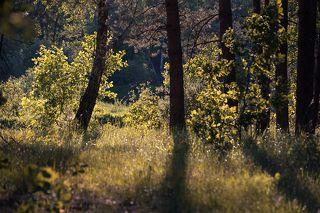 02 Молодая листва сияет в лучах солнца, ...
