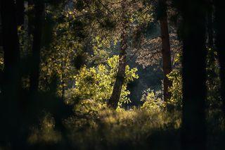03 ... а глубокие тени от стволов деревьев эффектно подчёркивают объём пространства