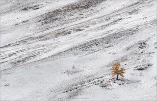 Склоны Северо-Чуйского хребта, плато Ештыкель