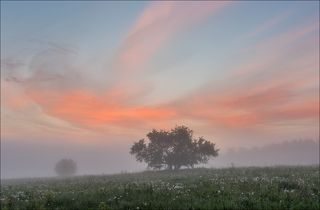 Дикая яблоня на восходе