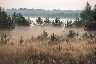02 Пейзажи с туманом это, конечно, красиво, атмосферно, художественно ...