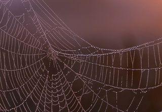 01 Меня давно восхищают чужие фото паутины, увешанной мелкими капельками тумана. В то утро и мне удалось поснимать что-то подобное ...