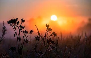 02 Свет восходящего солнца, рассеянный туманом, создал эффектную подсветку, ...