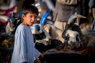 Мальчик на скотном рынке