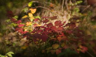 В лесной чаще Солнце пробивается через деревья, оставляя свой рисунок на траве, листьях...