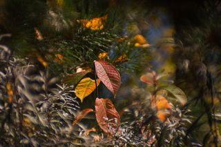 Лес окрашивается в разные цвета... Каждый цвет радует своим контрастом!