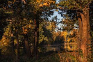 Первыми лучами Солнце касается деревьев..!