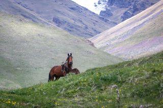 Лошади ...