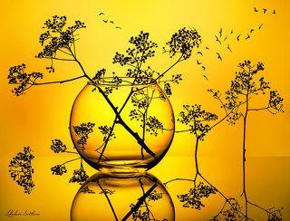 Силуэты соцветий на жёлтом фоне