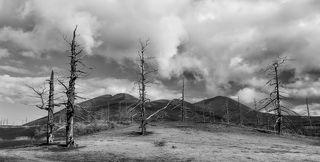 Мертвый лес под Толбачиком. Камчатка, сентябрь 2014.